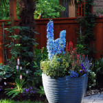 A Beautiful Summer Container