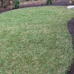 Tall fescue lawn