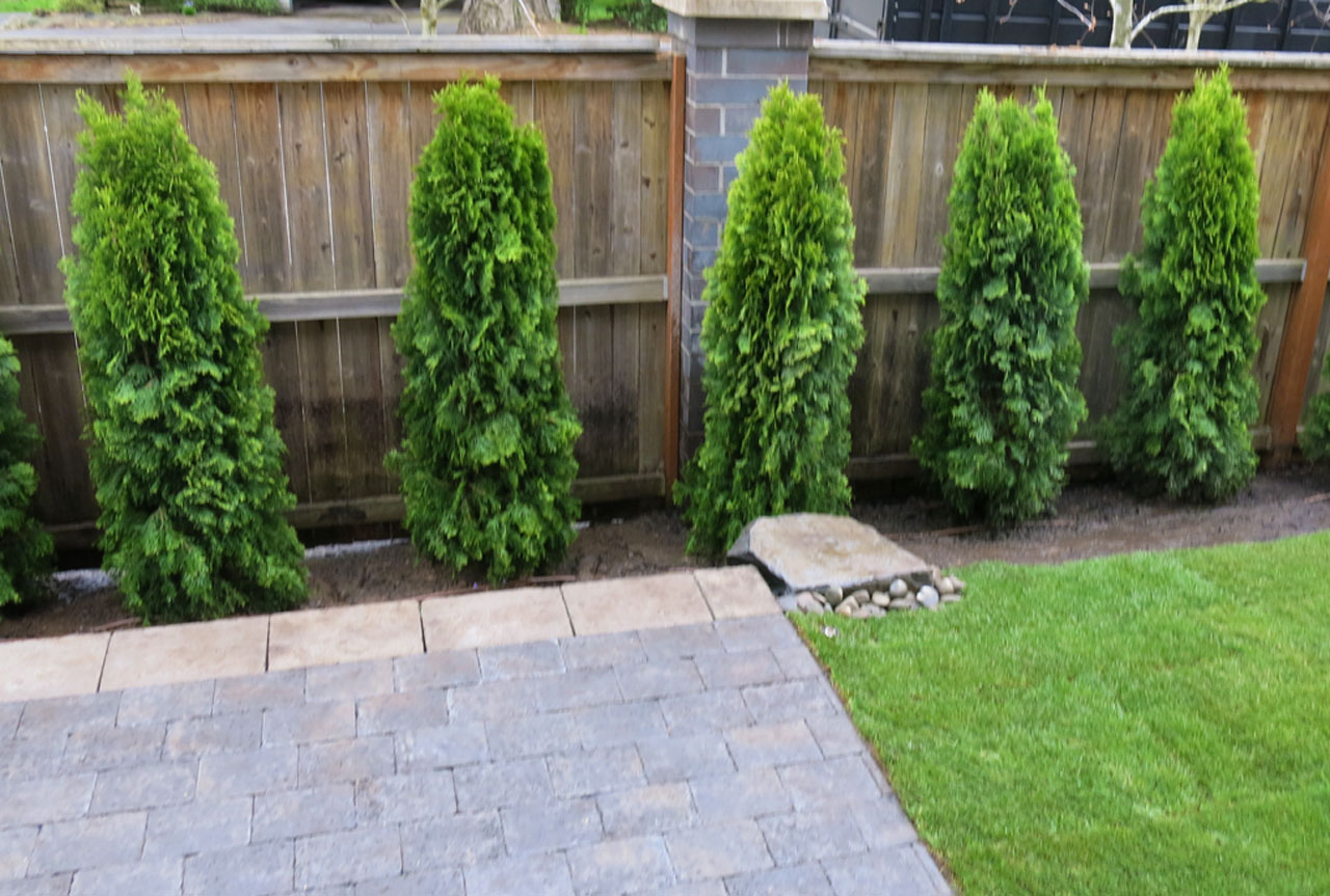 Terrific shrubs for privacy photos best inspiration home for Green privacy fence ideas